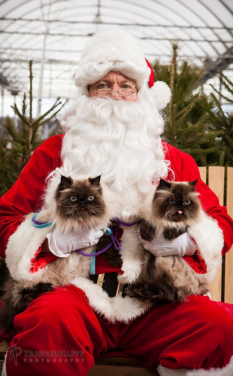 Santa BOB & 2 cats 2014.jpg