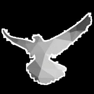 Bird_edited_edited_edited.png