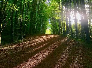 Forest Lees Rd.jpg