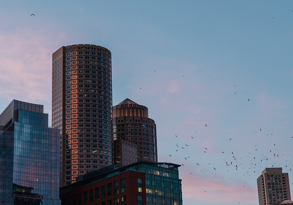 Seagulls flock around the buildings along Boston's waterfront
