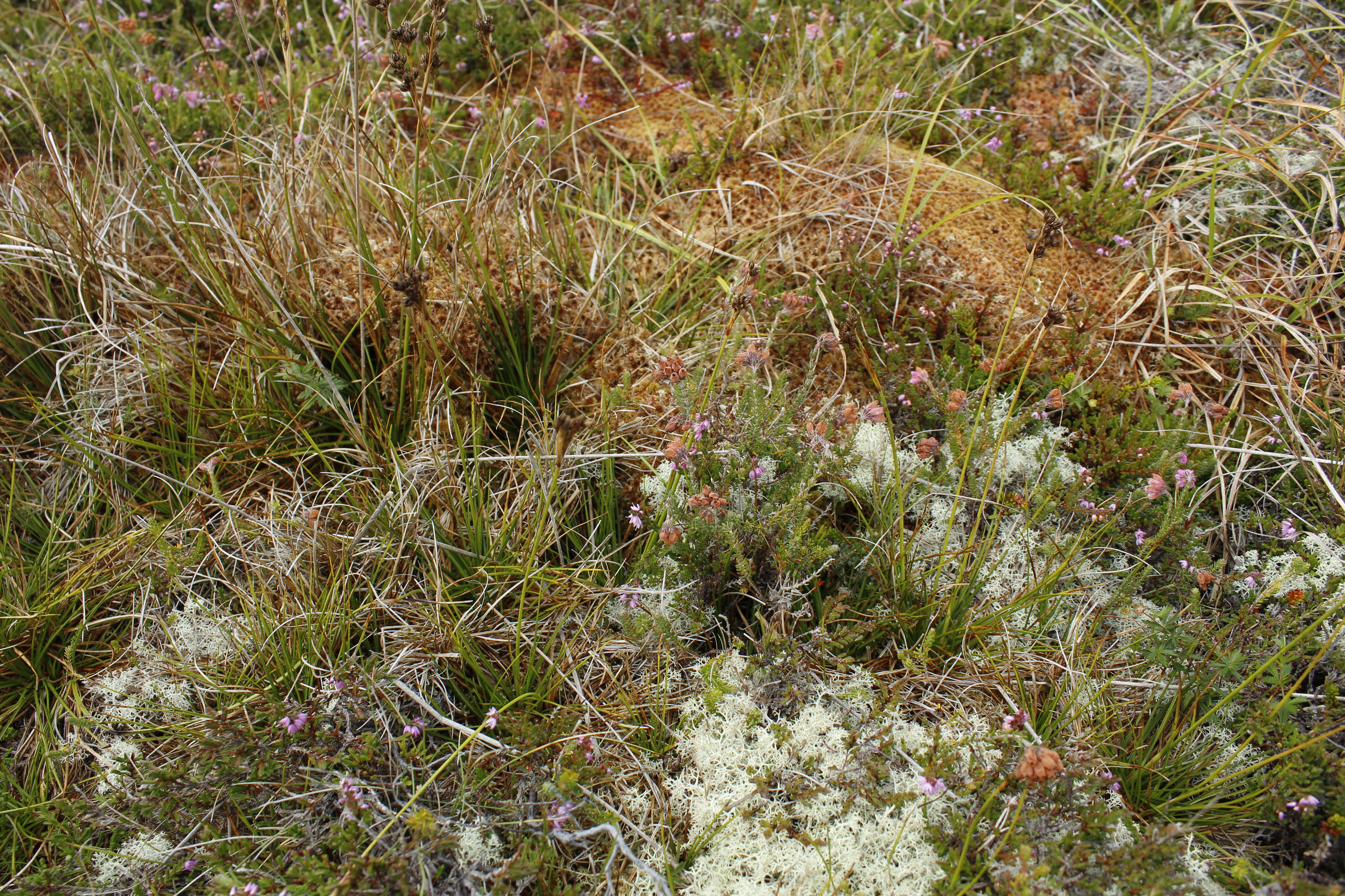 Moss on the estate is quite fascinating