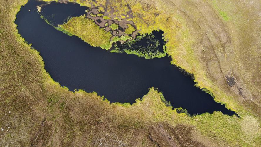 Grassy loch
