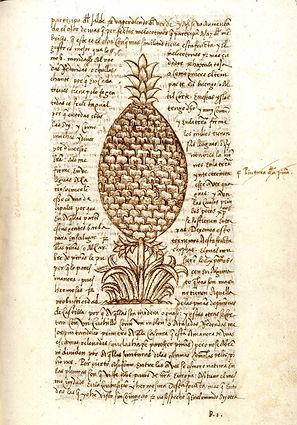oviedo-historia de las indias-ananas-man