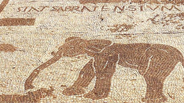 elephant-mosaique-sabratha-ostie-italie-