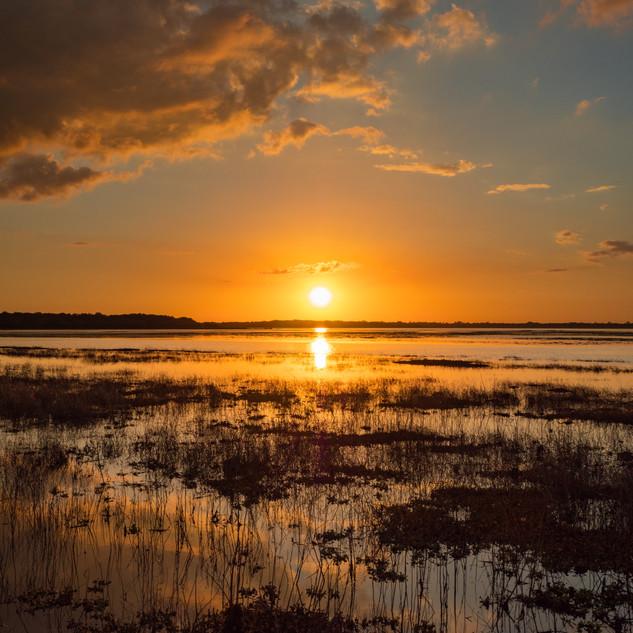Sonnenuntergang, Myakka River State Park, Florida