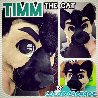 Timm Cat