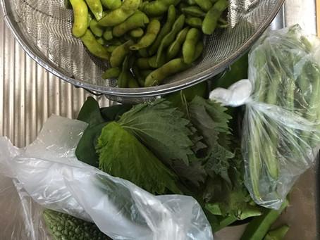 みんなの農園の野菜たち