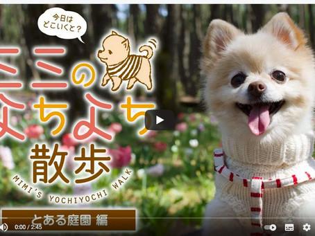 「ミミのよちよち散歩」第2弾完成!