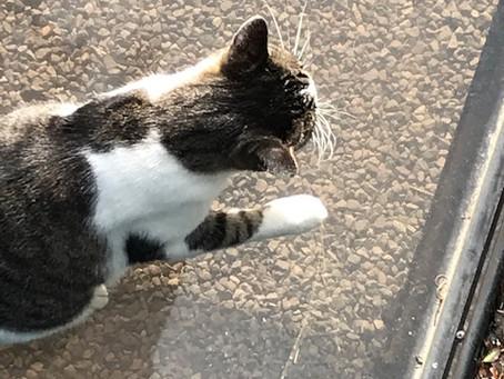 猫ってクモの巣を食べるんですね。