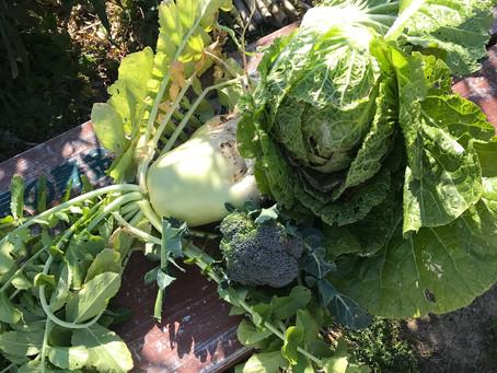 未来の会の農園の野菜いただきました。誰もいなかったので、ここでお礼を。