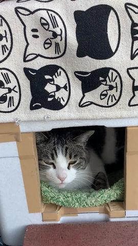 家をもらった猫