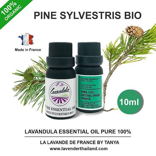 LAVANDULA - PURE 100% ESSENTIAL OIL - 10ML - PINUS SYLVESTRIS BIO