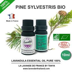 PINE SYLVESTRIS BIO ESSENTIAL OIL