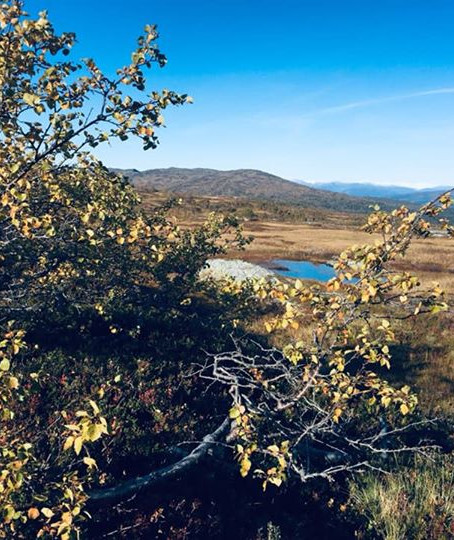 Korgen Mountain Today.