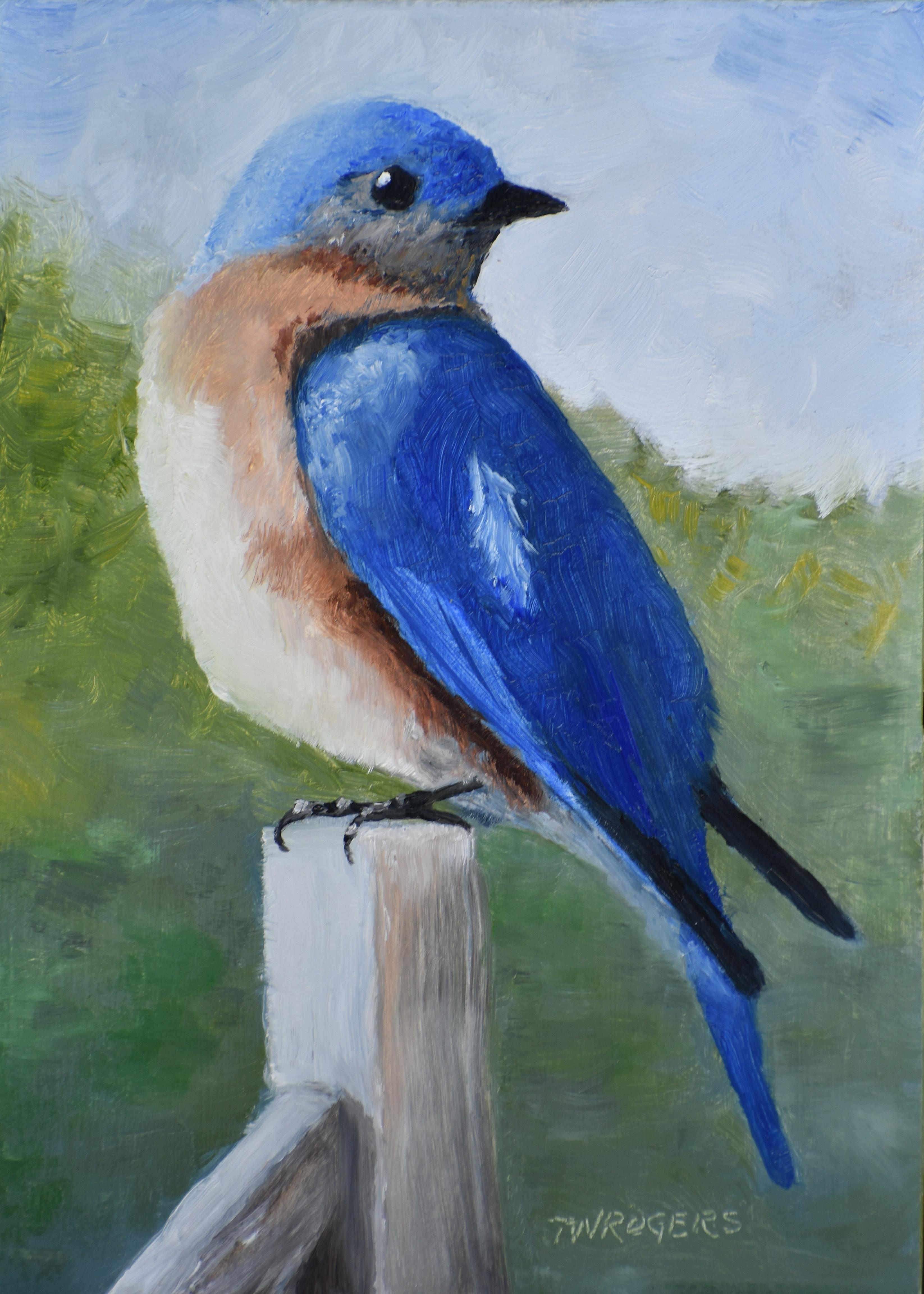 Todd Backyard Bluebird_Prints-1 (2)