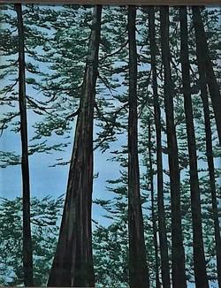 """Redwoods I"""