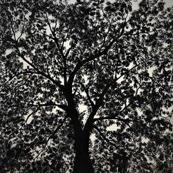 """""""Black tree I"""""""
