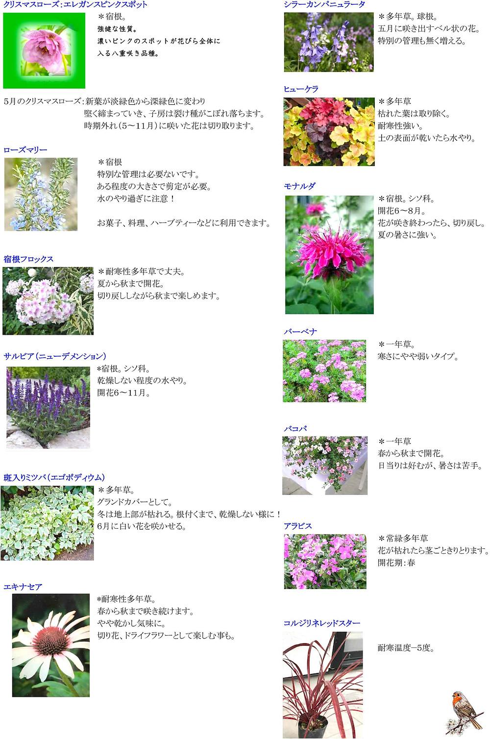 花壇の植物一覧