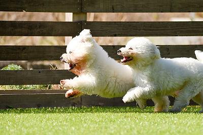 犬と木製フェンス
