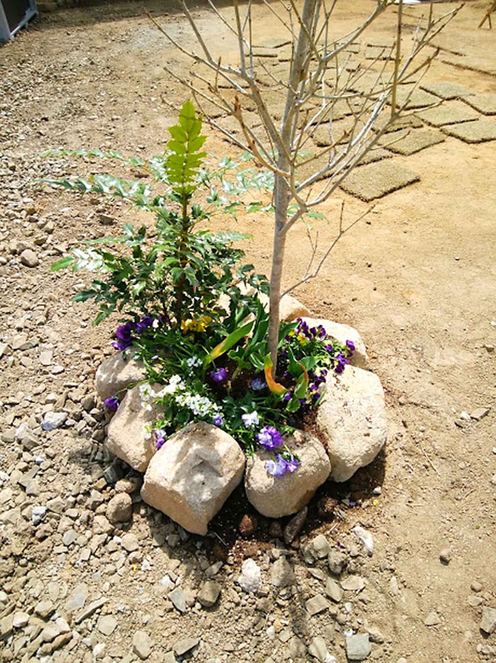 樹木周りの植栽2
