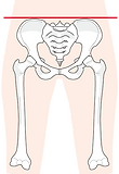 骨盤イラスト