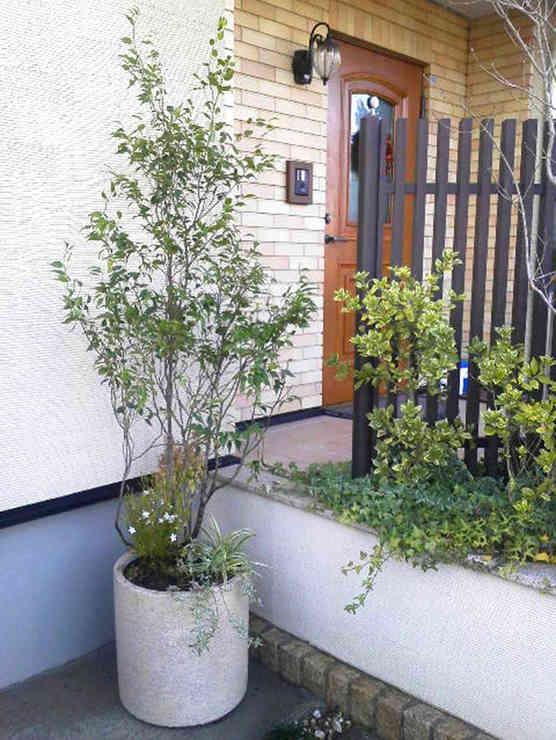 玄関前・鉢植え
