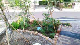 玄関まわりの植栽①