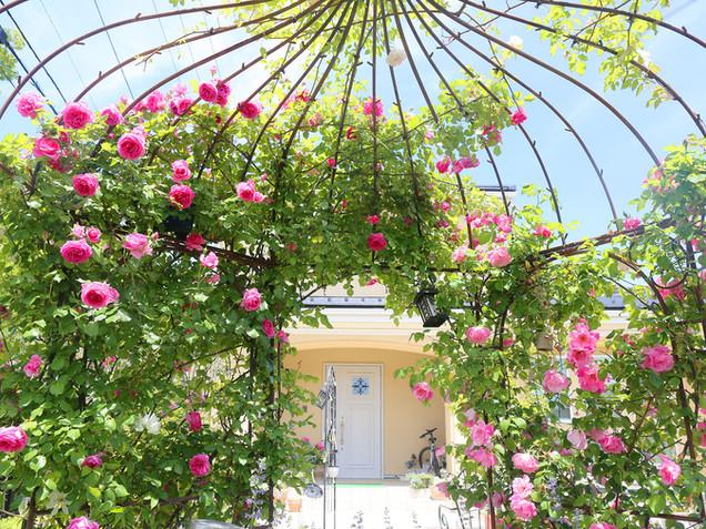 バラが咲き誇るガゼボ