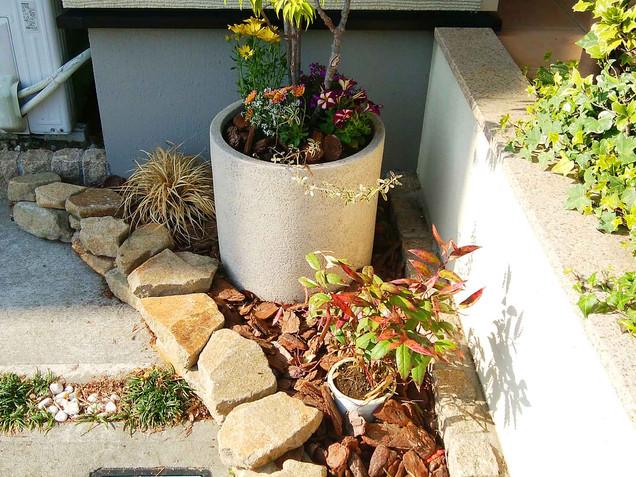駐車場脇のハイノキの鉢植えと植栽