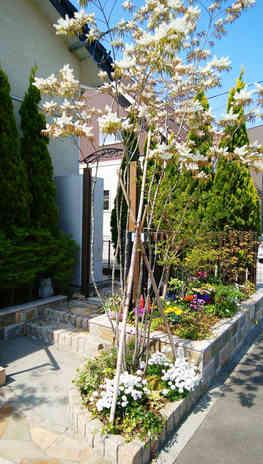 玄関のシンボルツリー