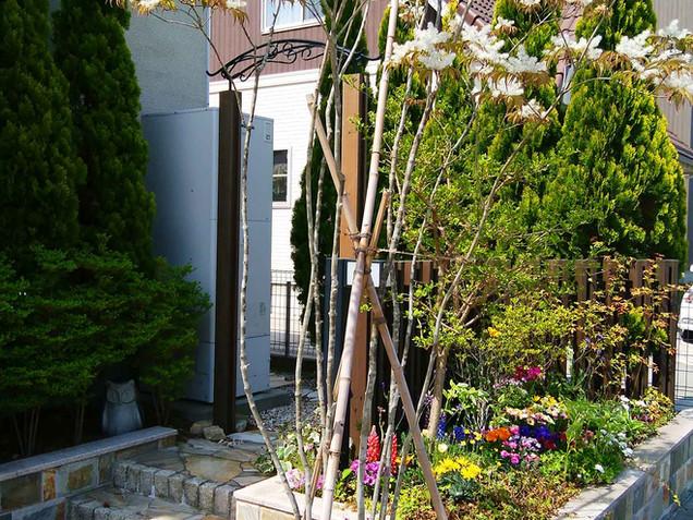 アオダモと根元のミニ花壇