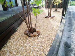庭木の根元