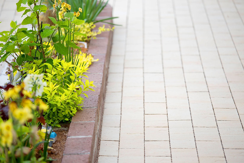通路と植物、黄色の花