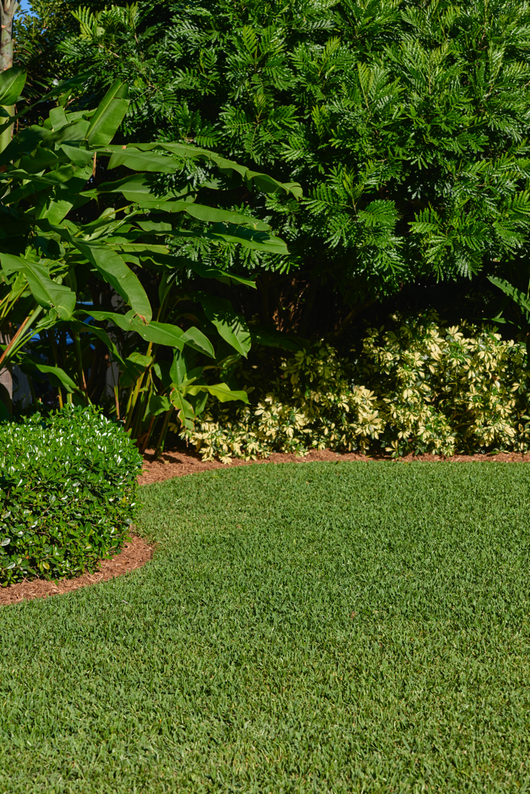 ALL PLANTS & LAWN PROTECTION