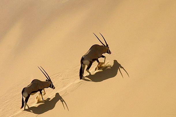 gazzelle_namibia_gallery