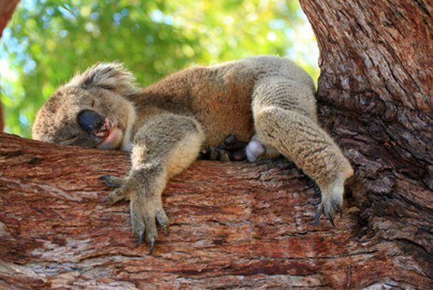 koala_gallery
