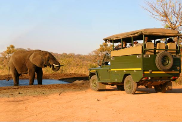 elefanteesafari1