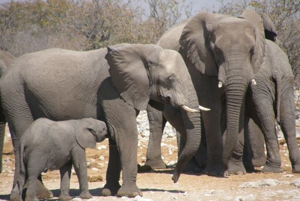 elefanti_namibia_gallery