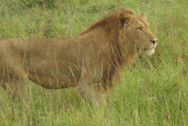 Leone Sudafrica