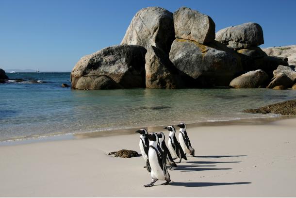 pinguinialmarediboulders1