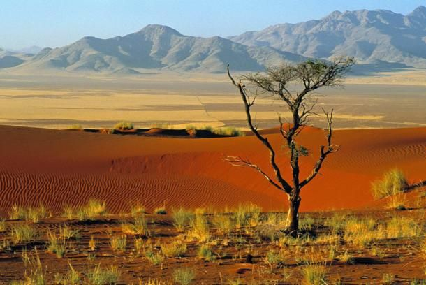 Desertorizz_namibia_gallery