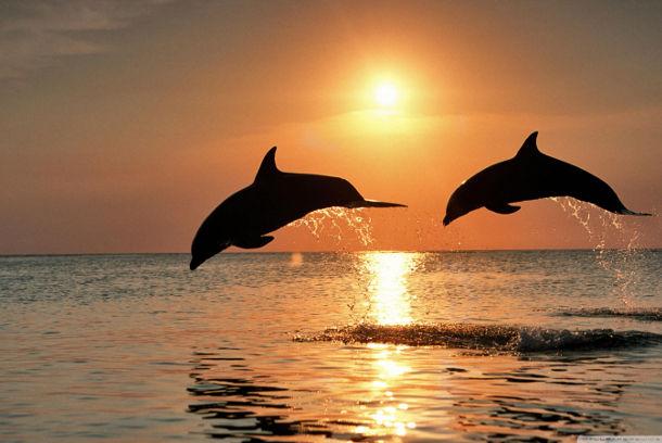 caraibi_delfini