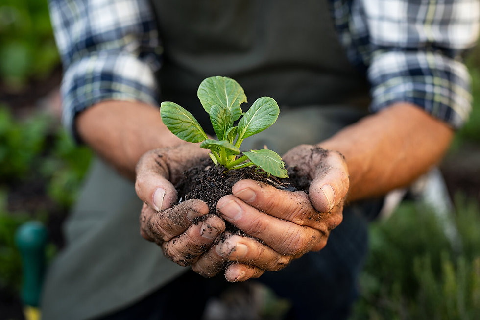 farmer-hands-planting-sprout-in-soil-CU5