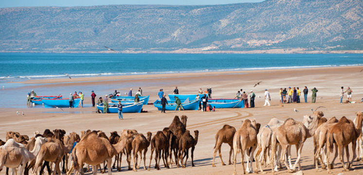 Agadir Camellos Playa