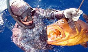 Campeão de Pesca Subaquática Marco Bardi - Caça Sub