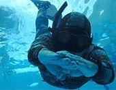 Curso de apneia - Mergulho Livre - Fronteira Sub