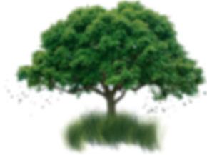 Bio Wash & Detail - Polimento, Vidrificação, Biolavagem, Higienização, Biolavagem + Cera Hidrofóbica ,Full Detail, Polimento Técnico Profissional.