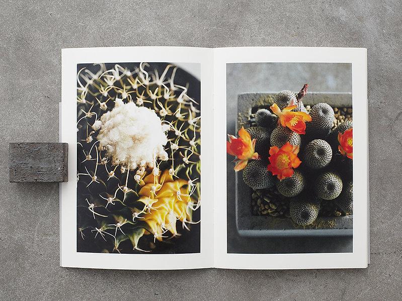 サボテン 多肉 lithops zine 静物 植物 写真