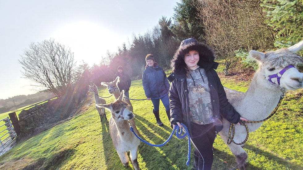 £10 Alpaca Experience Gift Voucher