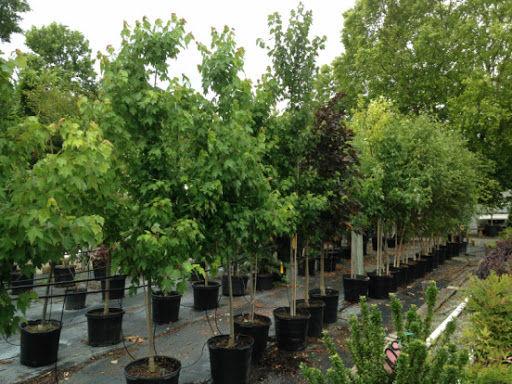 2021 Tree Planting Consultation
